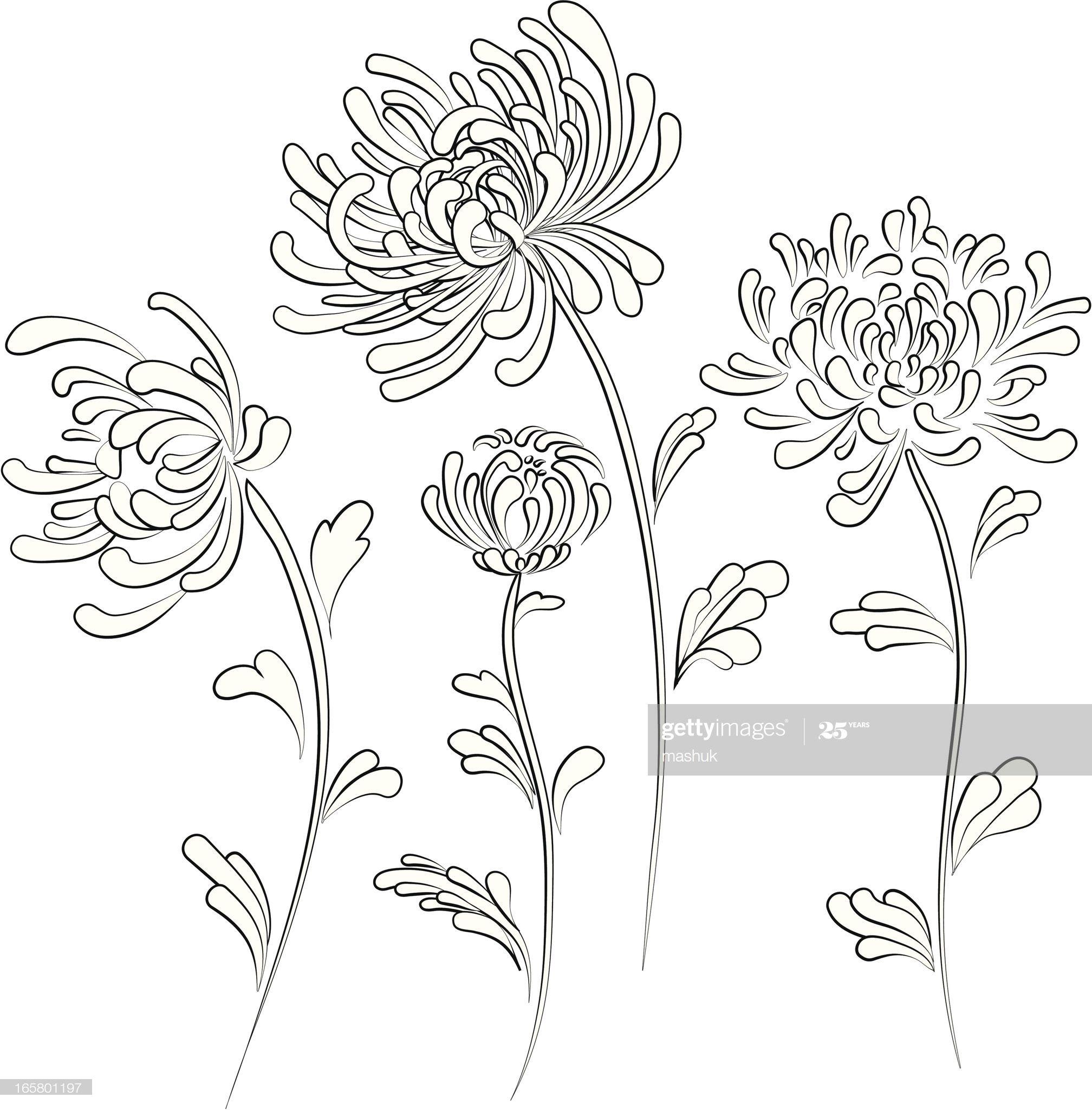 Chrysanthemum In 2020 Chrysanthemum Drawing Chrysanthemum Vector Art