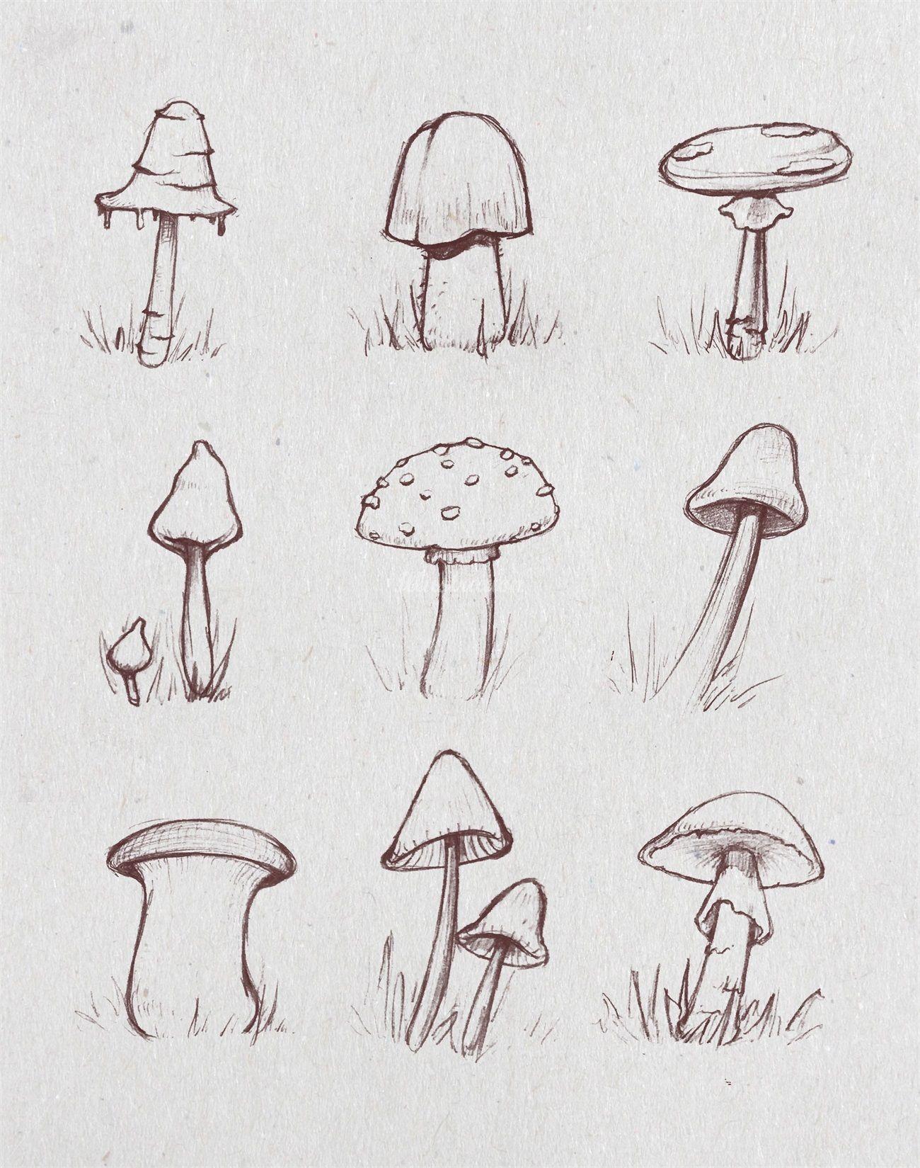 Sketch Of Growing Mushrooms Mushroom Growth Nature Fungi Autumn Fall Macro Food Art Drawing Sket Nature Art Drawings Nature Drawing Mushroom Art