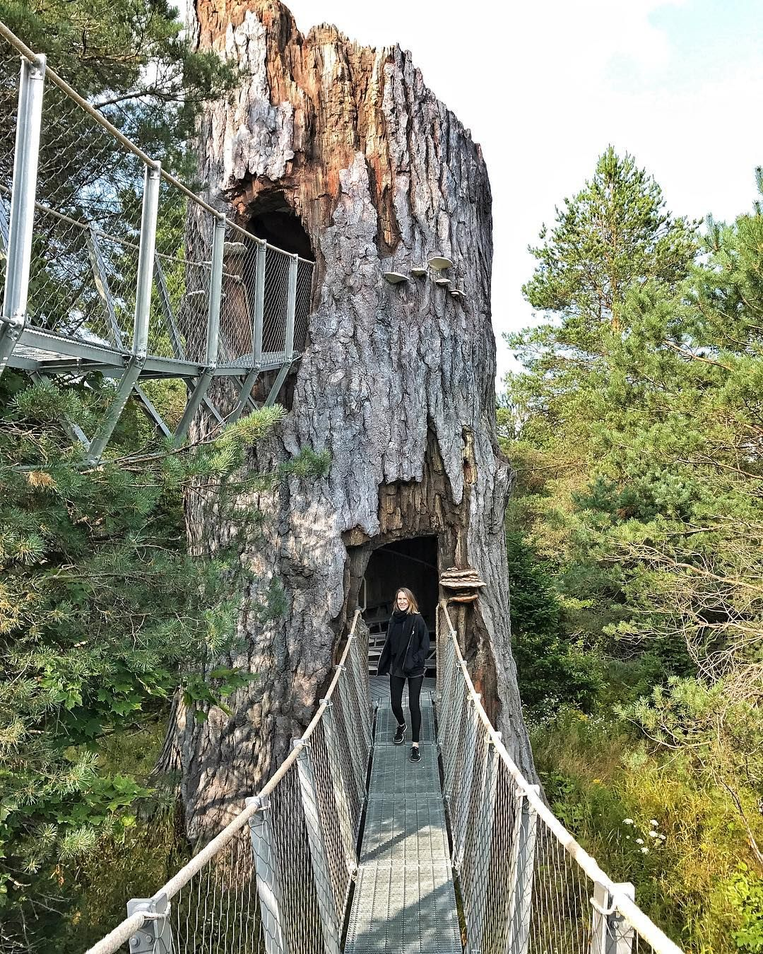 You Can Walk Through This Massive Elevated Treetop Trail Near Ontario This Summer Ontario Travel Ontario Road Trip Canada Travel