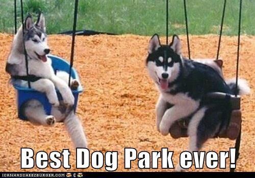 Another Day At The dog Park Meme | Slapcaption.com