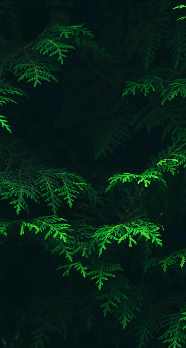 Background Forest Wallpaper Iphone Green Leaf Wallpaper Dark