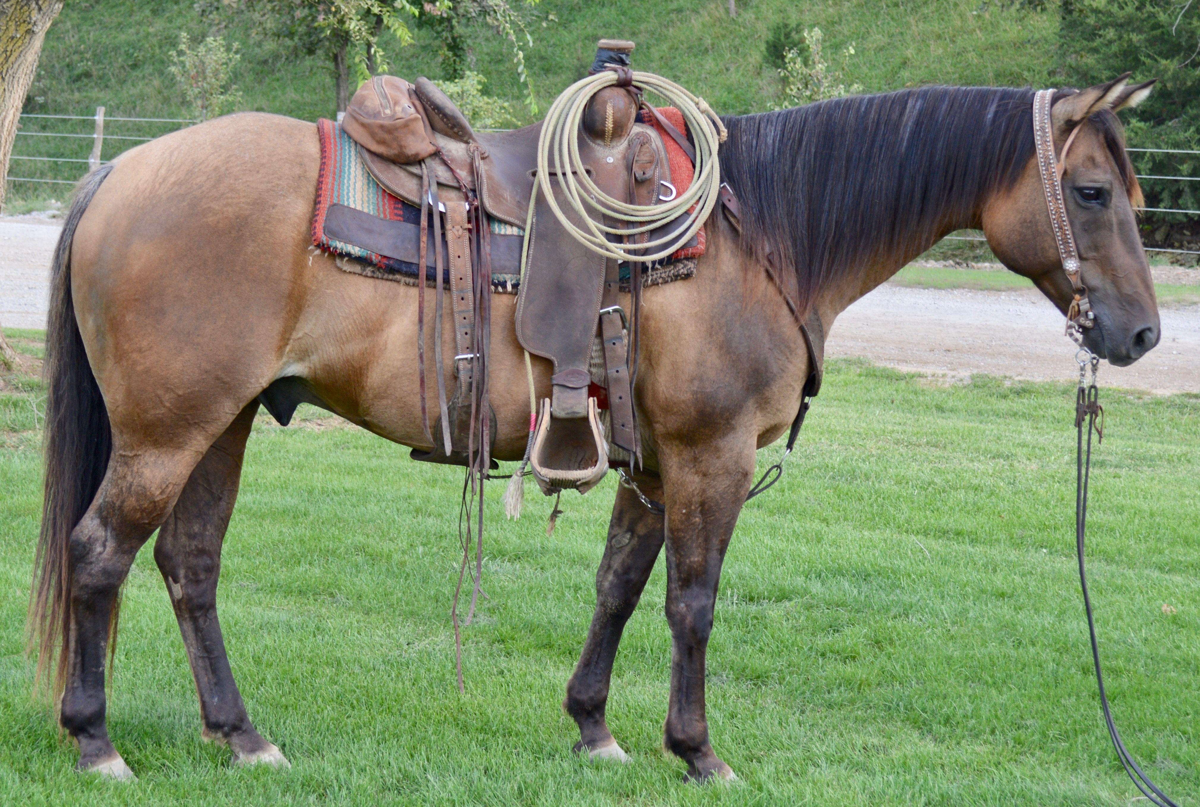 For Sale Porter Quarter Horses Horses for sale, Horses
