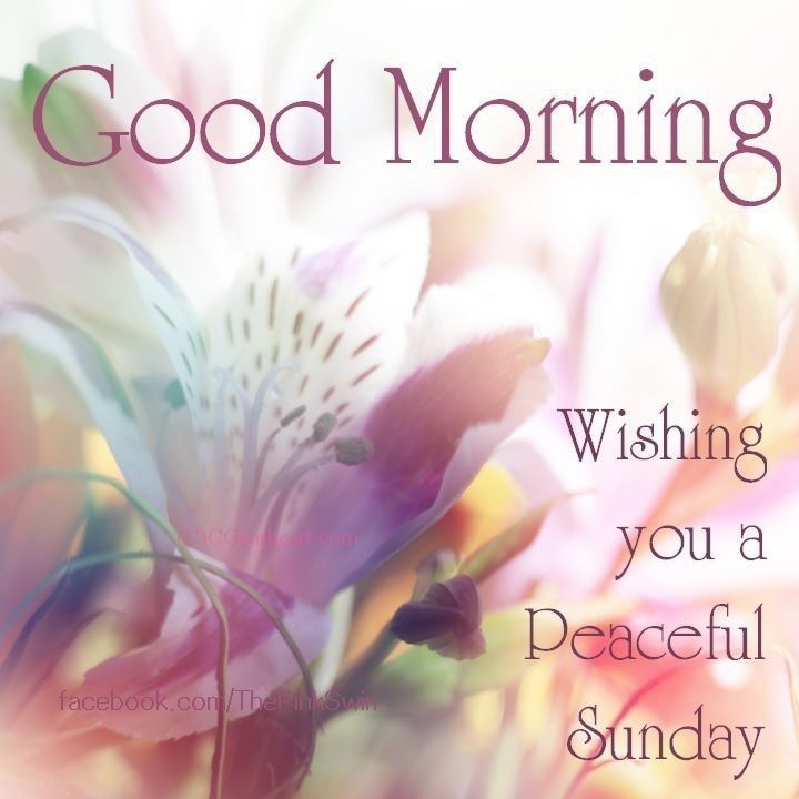 good morning wishing you a peaceful sunday