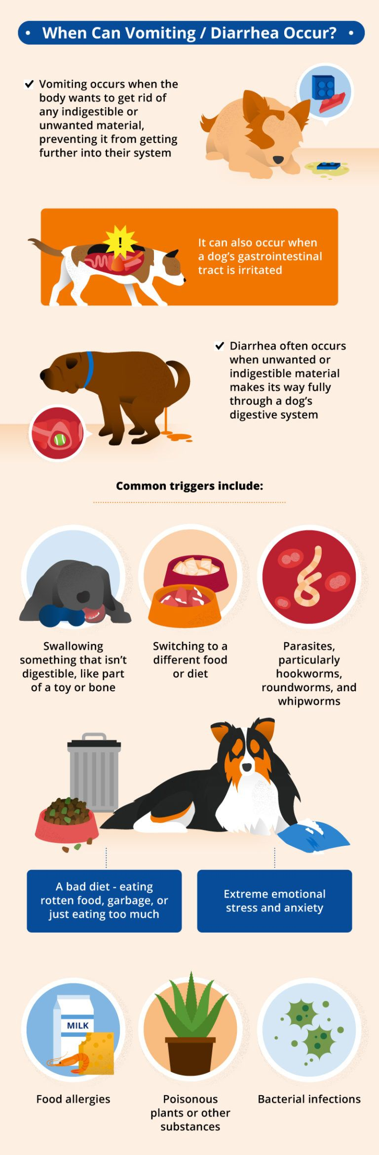 Vomiting And Diarrhea In Dogs Diarrhea In Dogs Dogs Pets