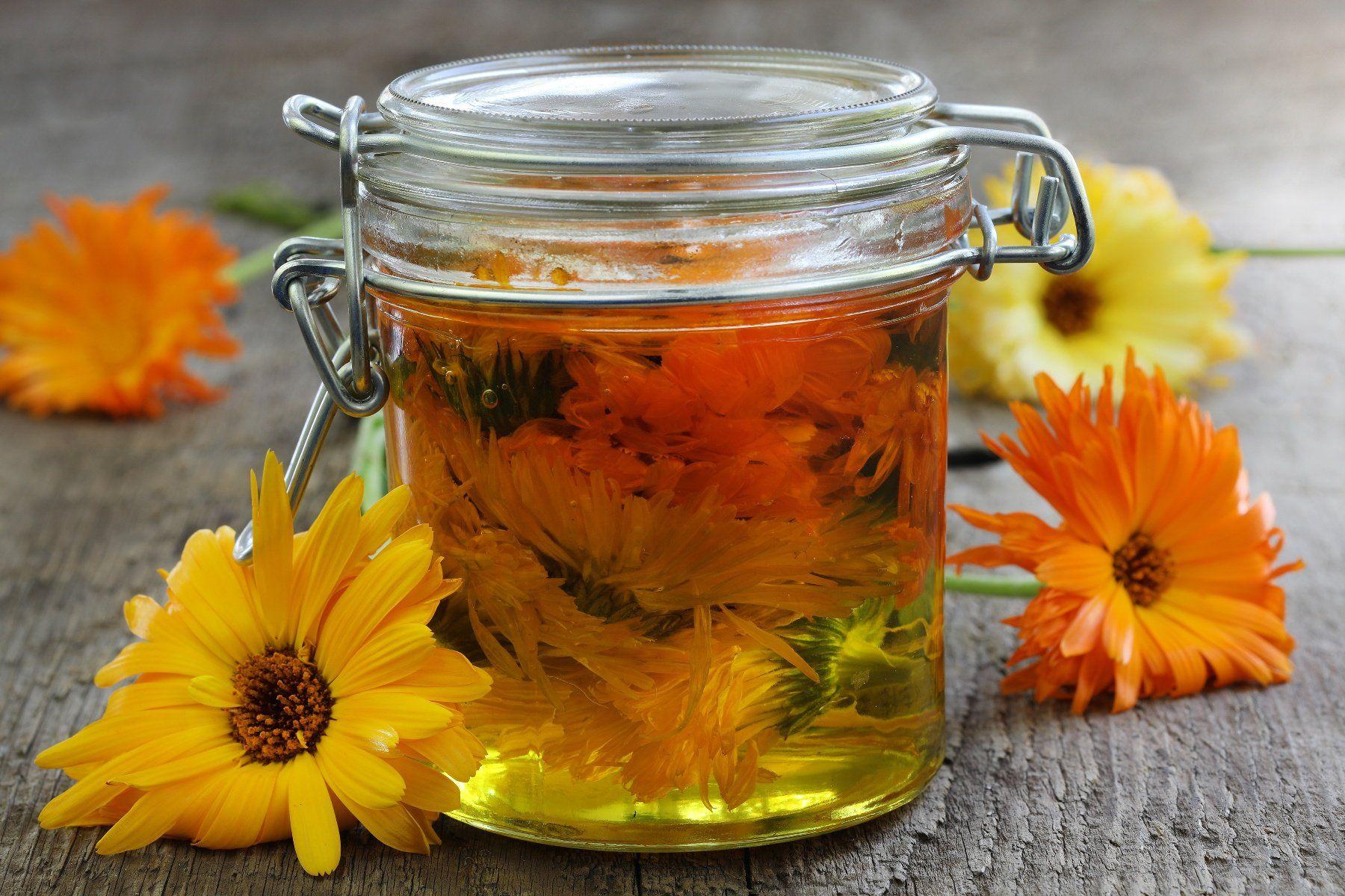Calendula Uses + Infused Olive Oil Recipe Mountain rose