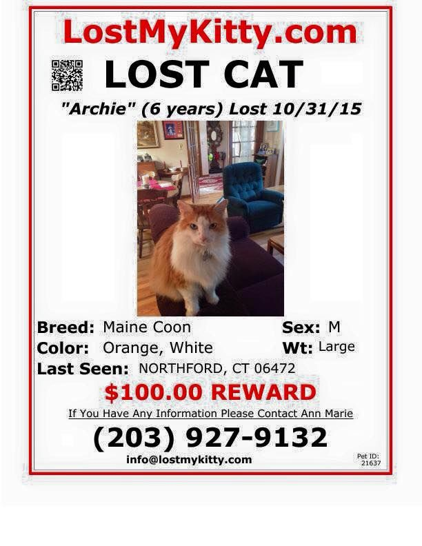 Timeline Photos Branford Compassion Club Lost Cat Pet Id