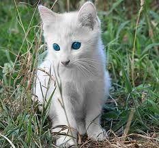 Albinotiere - Google-Suche, #Albino #albinoanimalangel #animals #Google #Se ... -  Albinotiere – Google-Suche,  #Albino #albinoanimalangel #Tiere #Google #Suche –  - #albino #albinoanimal #albinoanimalangel #albinotiere #amazinganimals #animalbackgroundiphone #animalwallpaperiphone #animals #animalsplanet #basicanimaldrawings #blackandwhiteanimalphotography #google #GoogleSuche #suche #albinoanimals