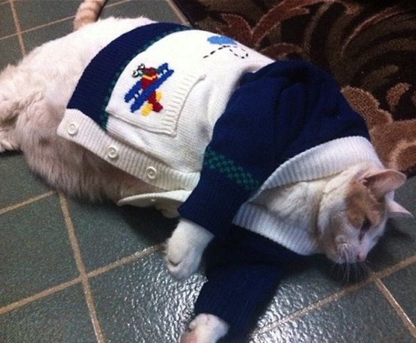 25 Funny Cats in Human Dress that will force you to laugh