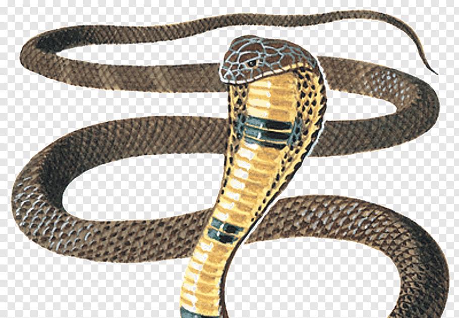 Wallpaper Ular Cobra