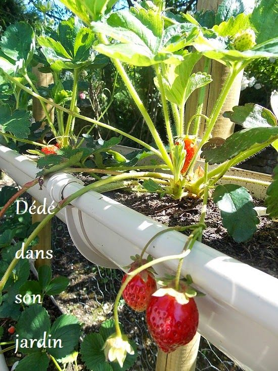 faire pousser des fraises en hauteur potager pinterest aquaponics aquaponics system and. Black Bedroom Furniture Sets. Home Design Ideas