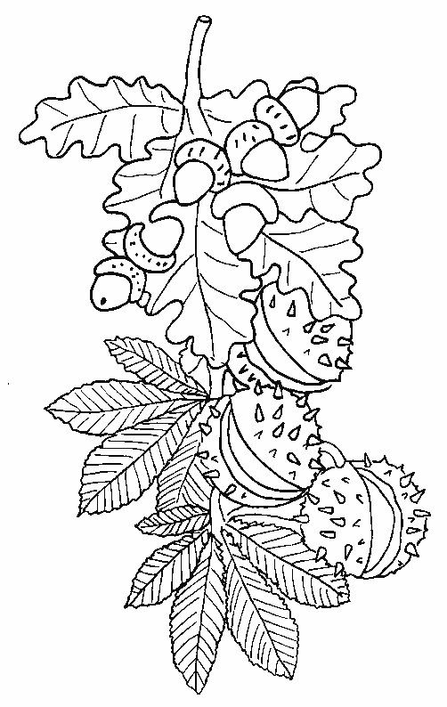 Pin von eva gubik auf tree and leaves coloring pinterest - Fensterbilder malen ...