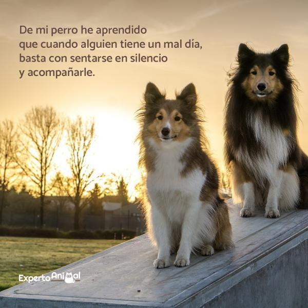 Photo of Frases de perros – ¡Más de 60 ideas para inspirarte!