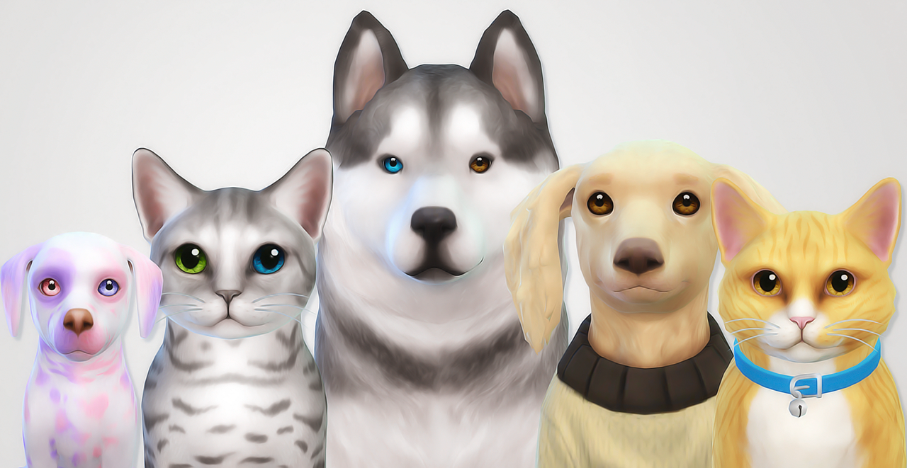 sims for how to add dogs and cats