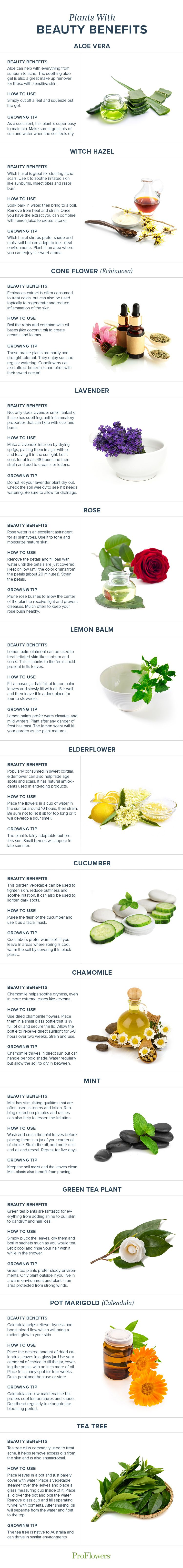 Are you looking for ways to cut chemicals out of your beauty routine? Go organic! We list 13 plants and their benefits for your beauty routine.