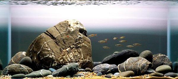 Plantless Aquascape Aquascaping Biotope Aquarium Cichlid