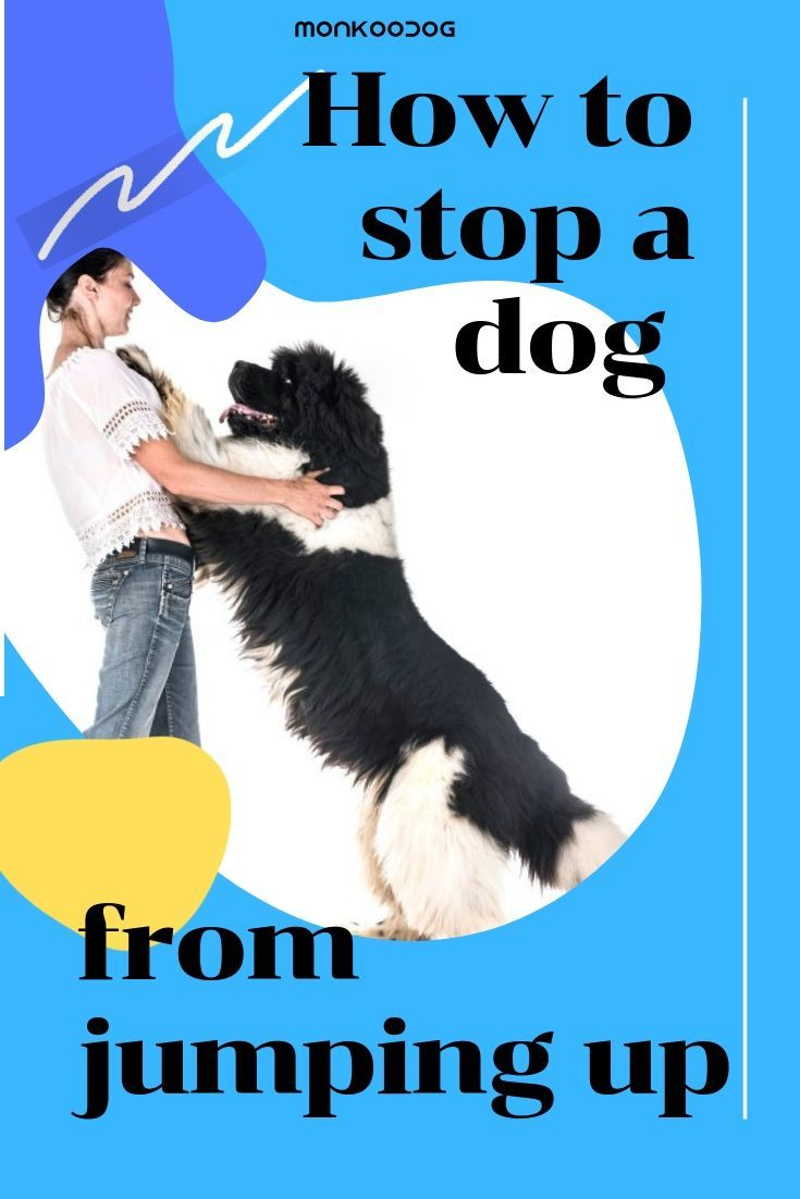 How to stop a dog from jumping up smart dog dogs dog