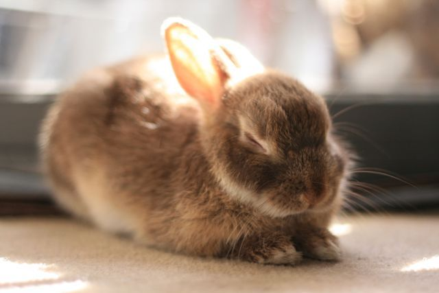 00 Usagi 00 おしゃれまとめの人気アイデア Pinterest Ibis Wedding 画像あり 可愛い 動物 ウサギ うさぎ