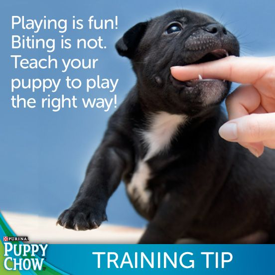 A Training Tip For Your Puppy Pets Dog Teeth Puppies Purina