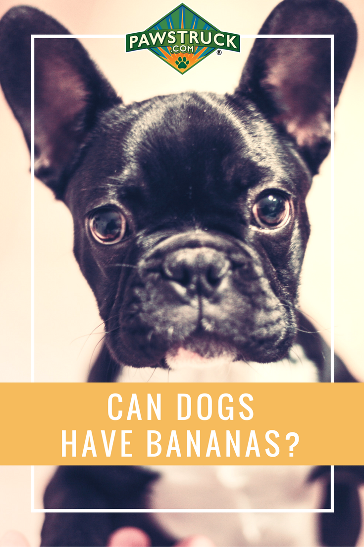 Can Dogs Eat Bananas Everything You Need To Know Pet Clinic Dog Training Near Me Small Animal Clinic