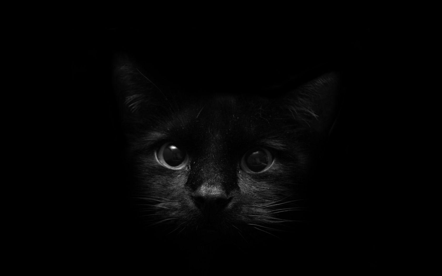 Download Wallpapers Download 1680x1050 Eyes Black Dark Cats Animals Pets Black Background 1600x1200 Wallpaper Wa Black Cat Images Cat Background Cat Wallpaper