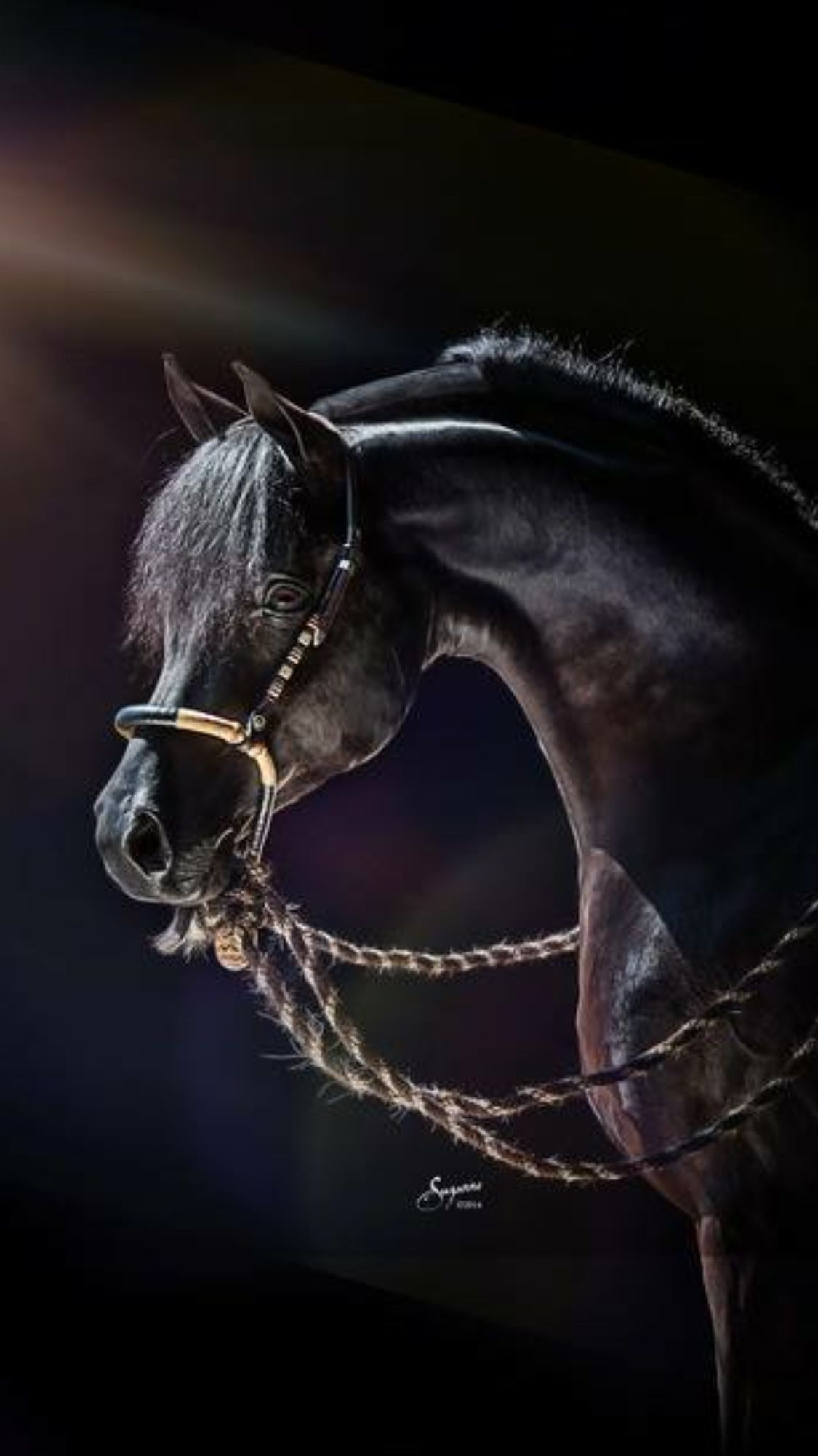 This is stunning, as a photo it's beautiful...as a horse he's magnificent!
