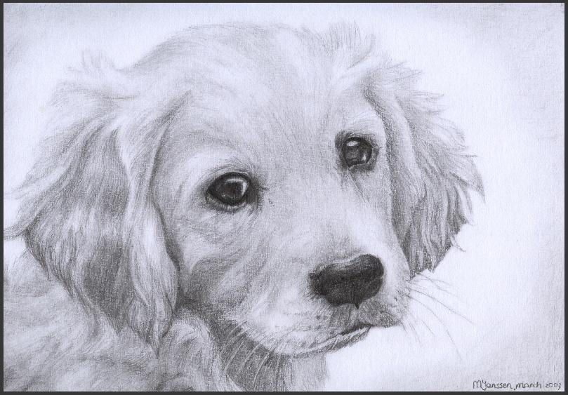 Golden Retriever Puppy By Wiccansoul Golden Retriever Drawing