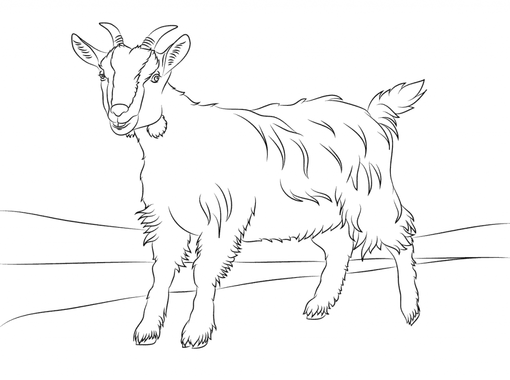 Free Printable Goat Coloring Pages For Kids Animal Coloring Pages Cute Goats Coloring Pages