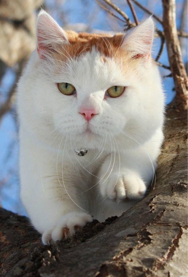 Beautiful Shiro