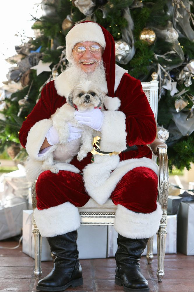 Check out the photos from Yappy Howl-idays 2015.