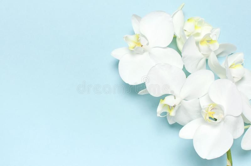 Beautiful White Phalaenopsis Orchid Flowers On Pastel Blue Background Top View F Affiliate Blue Pa Pastel Blue Background Orchid Flower Blue Backgrounds