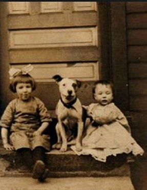 Vintage Portrait Of Small Boy With Pitbull By Tails Of The Past