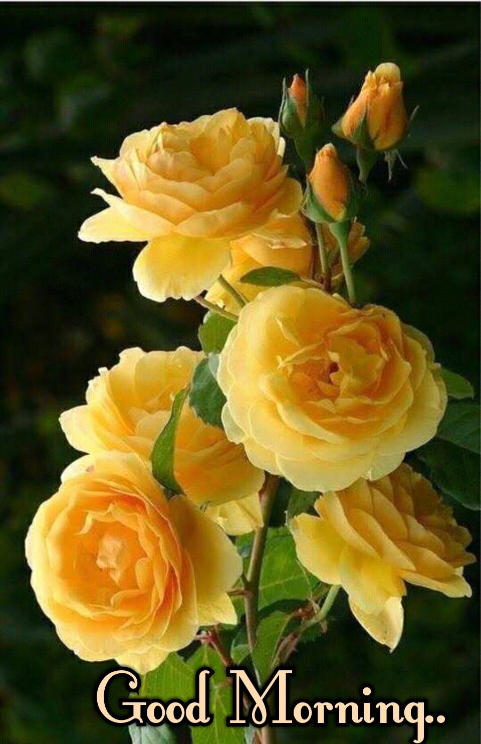 Beautiful yellow rose gardens - Yellow Roses Are One My Favorite Flower They Make You Feel Happy With Their Smiling Color Gardening Aisle