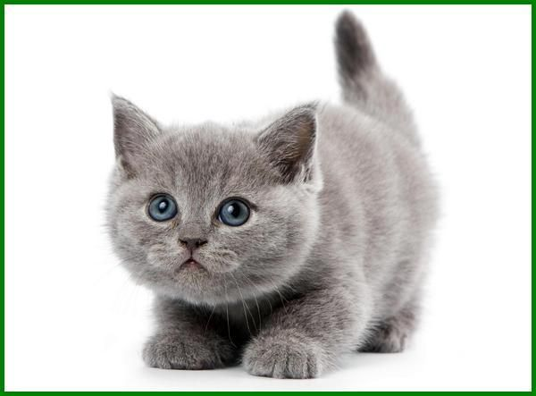 Intip Yuk Nama Kucing Korea Yang Bagus Daftarhewan Com Di 2020 Kucing Kucing Manx Kucing Betina
