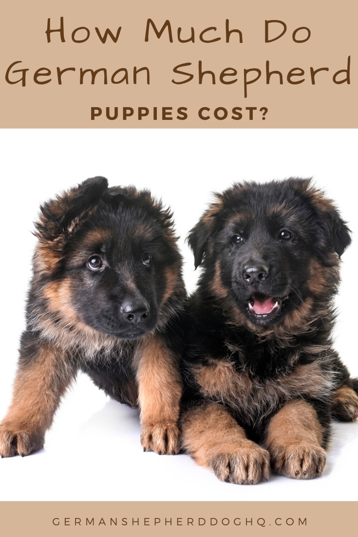 How Much Do German Shepherd Puppies Cost? in 2020 German