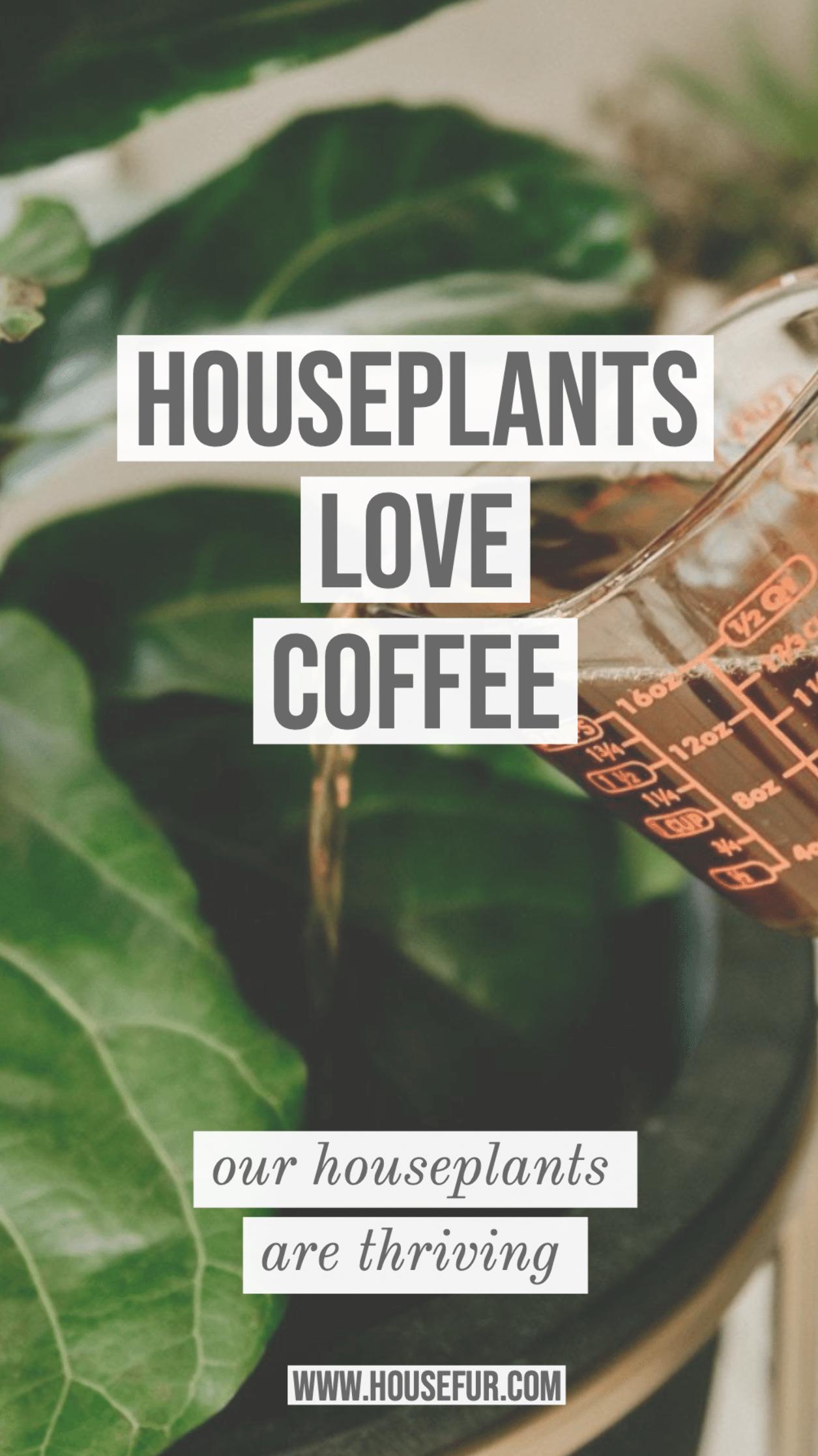 Houseplants Love Coffee As A Natural Fertilizer Plants 400 x 300