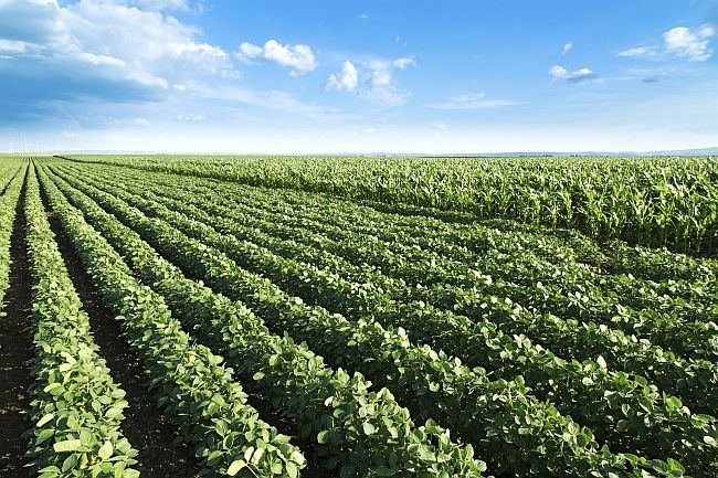 Agriculture jobs Why you want a job in agriculture