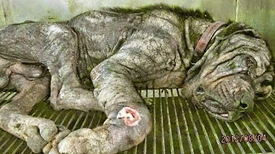 Bijzondere redding van een zwaar verwaarloosde hond.