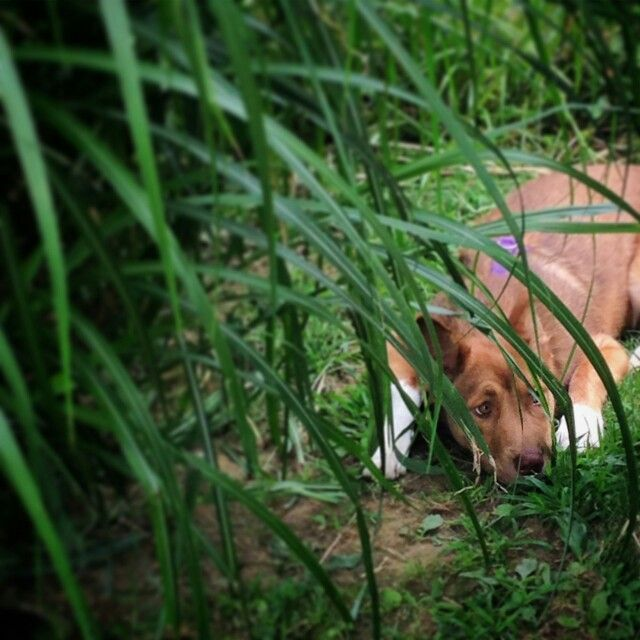 Lazy day in the grass. Photo By Maggie Kinney