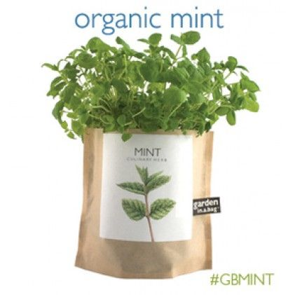 Potting Shed Creations - Mint Garden-in-a-bag | Green | Pinterest ...