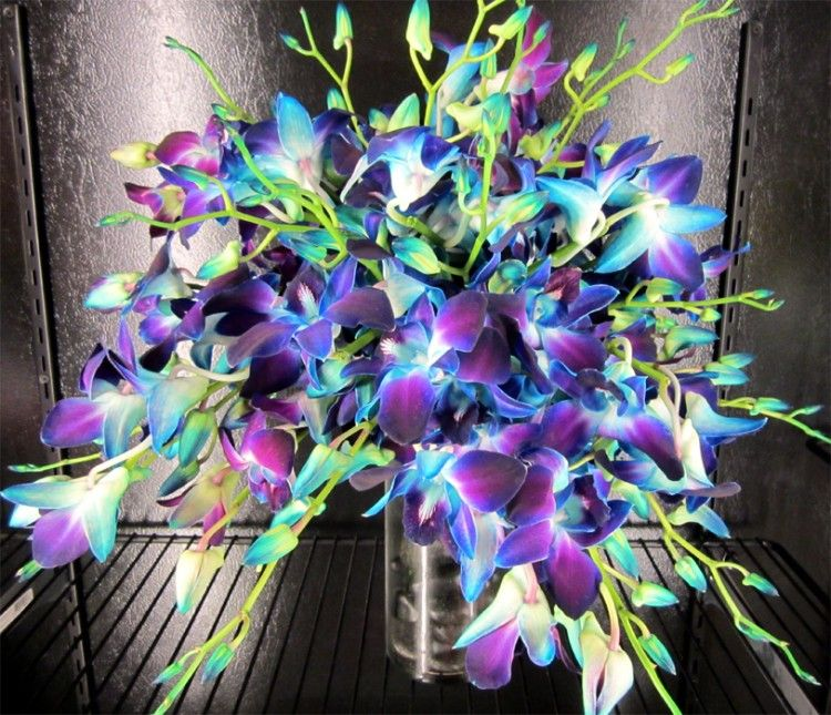 orchid bridal bouquet of purple bombay dendrobium orchids ...