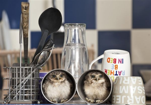 What a hoot! :)