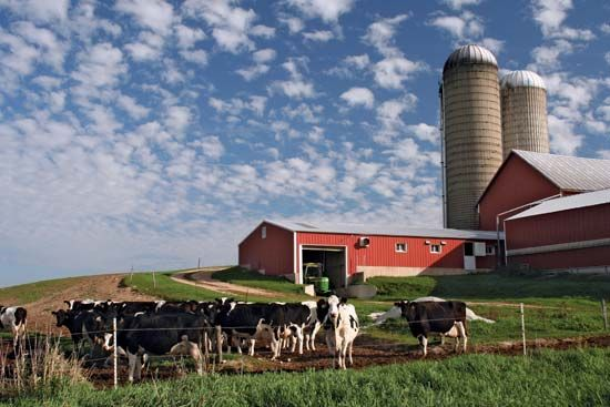 Dairying Modern Wisconsin Dairy Farm With Holstein Cows