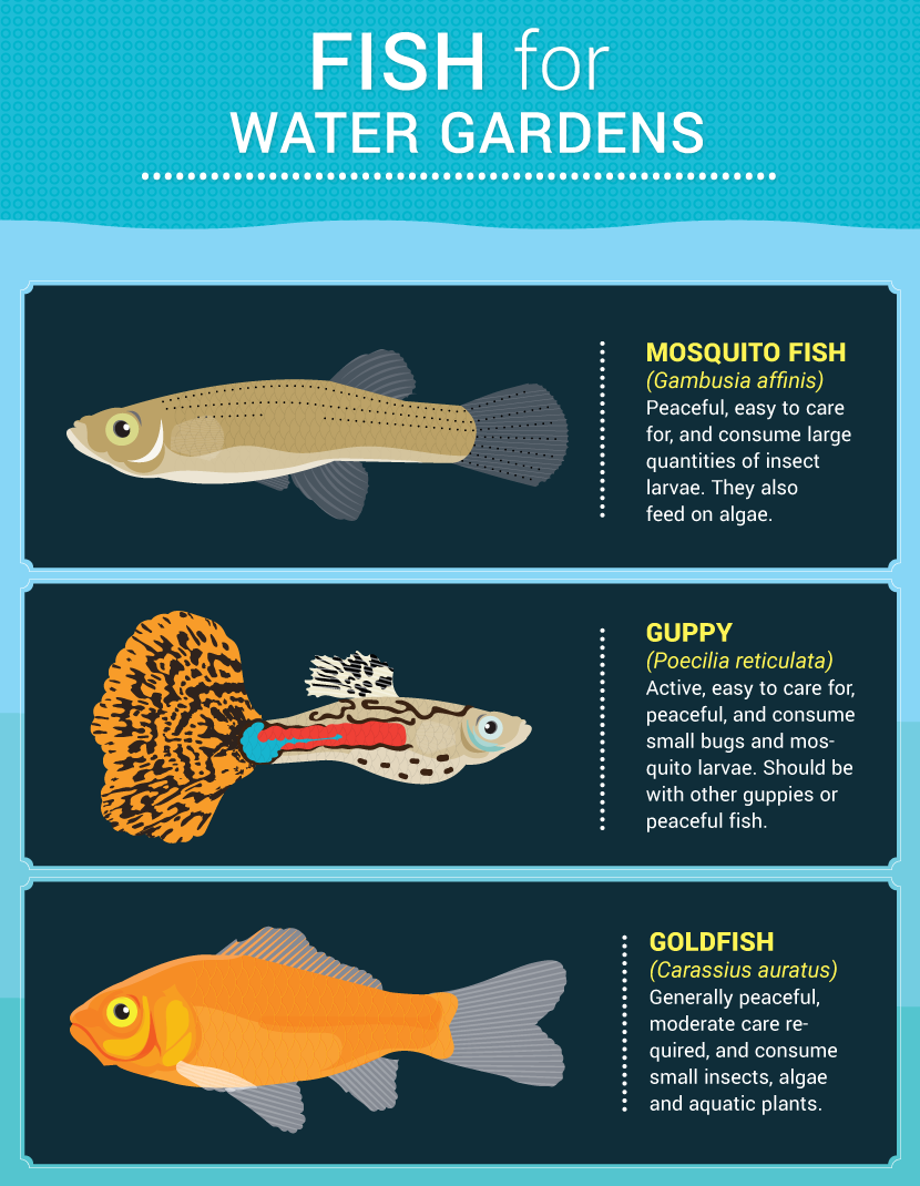 National geographic fish feeder instructions wiring for Fish pond repair