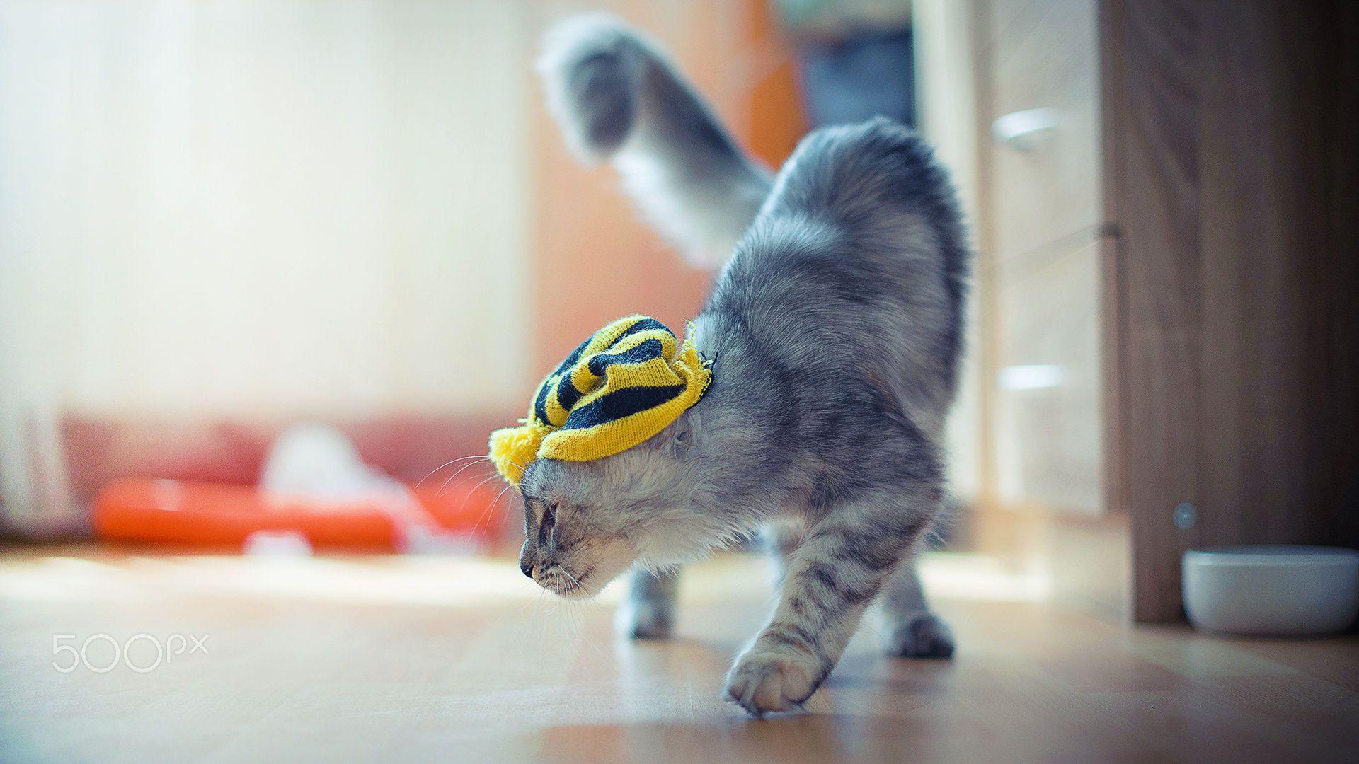 cat by Sekurit