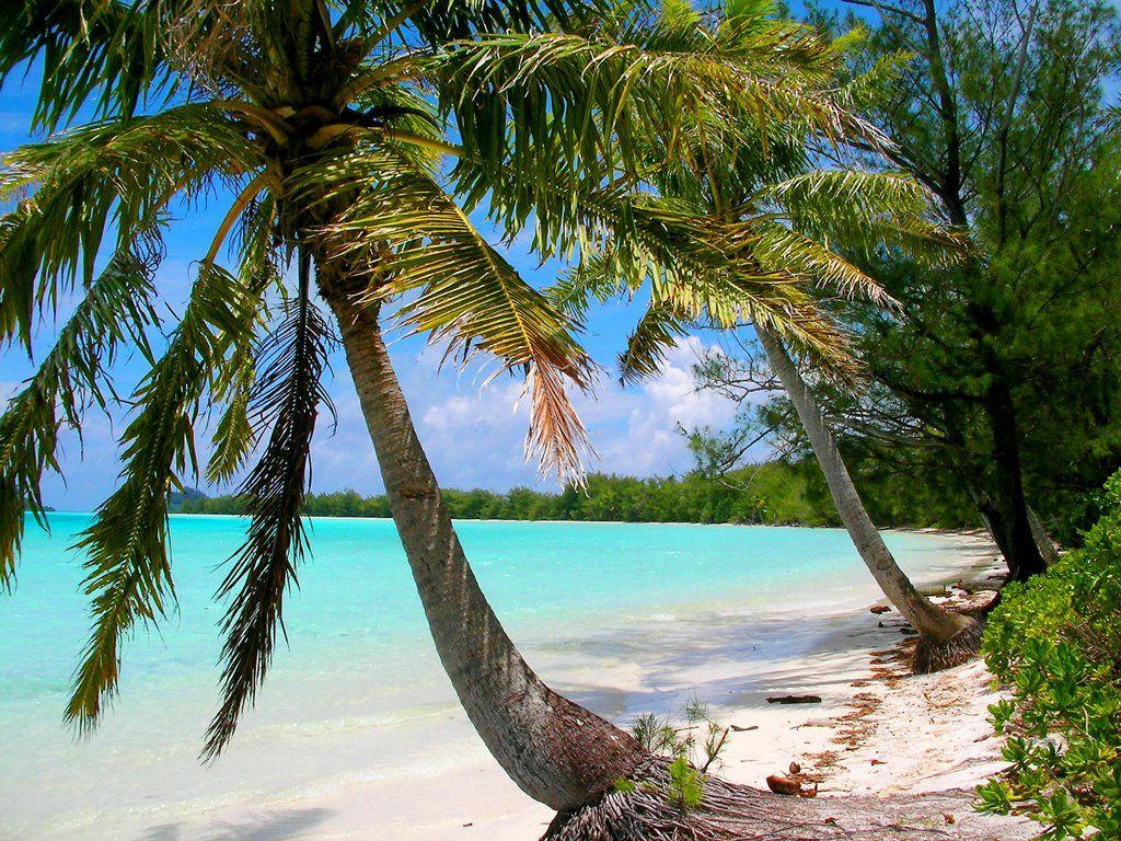 Motu Araao is an island within French