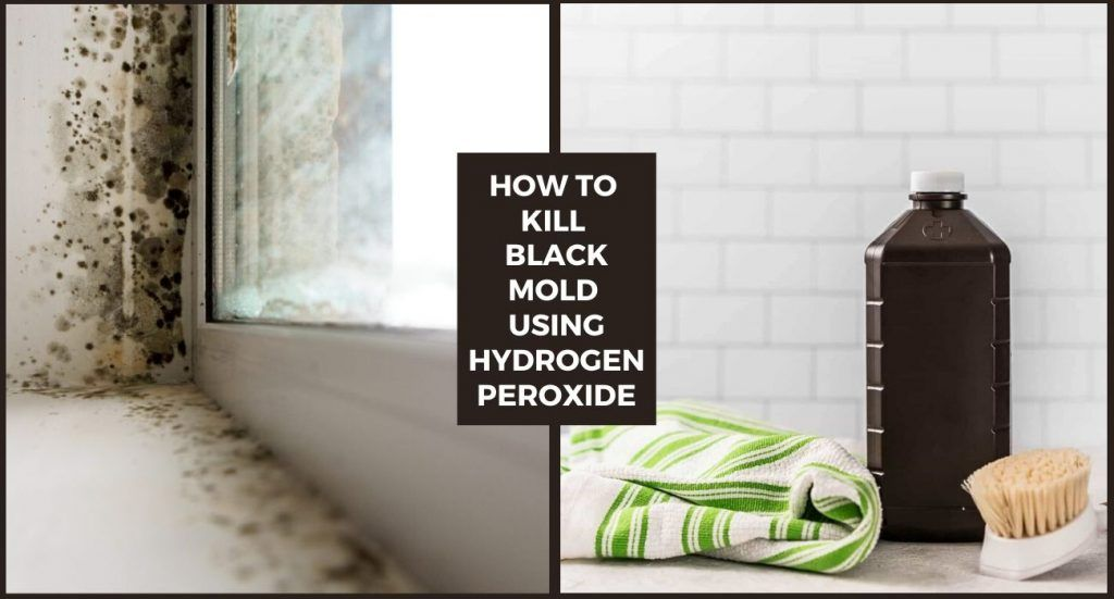 8beec5eaef0559f0171f8d4fec48cefe - How To Get Rid Of The Mold In The House