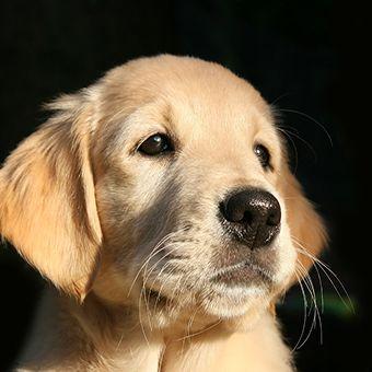puppy-1187267_1280