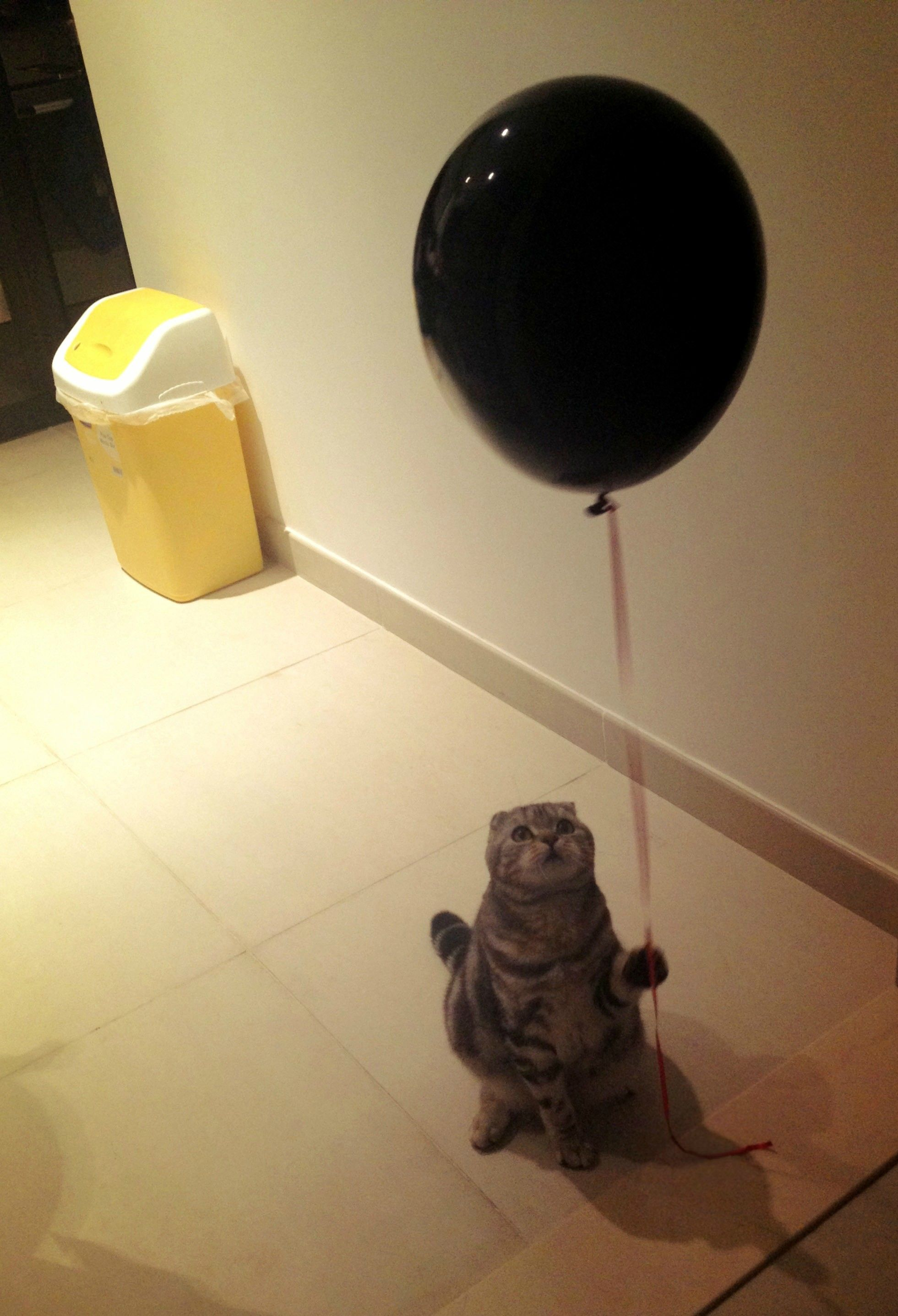 My cat with a balloon
