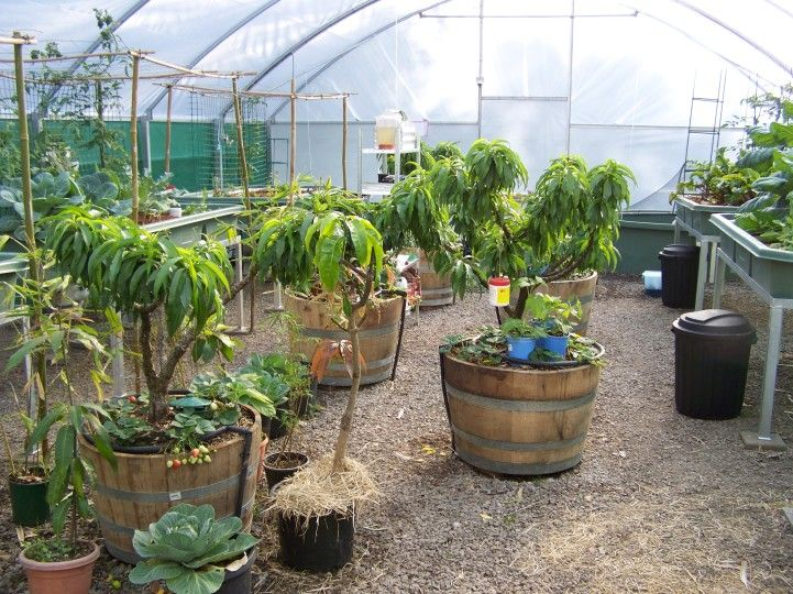 Do It Yourself Home Design: Fruit Trees - Aquaponic Gardening