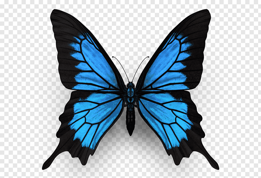Monarch Butterfly Ulysses Butterfly Insect Menelaus Blue Morpho Butterfly Png Blue Morpho Butterfly Monarch Butterfly Tattoo Butterfly Drawing